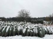 winter201500001