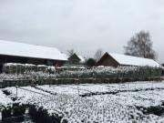 winter201500009
