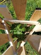 Holzbaumschutz3