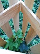 Holzbaumschutz4